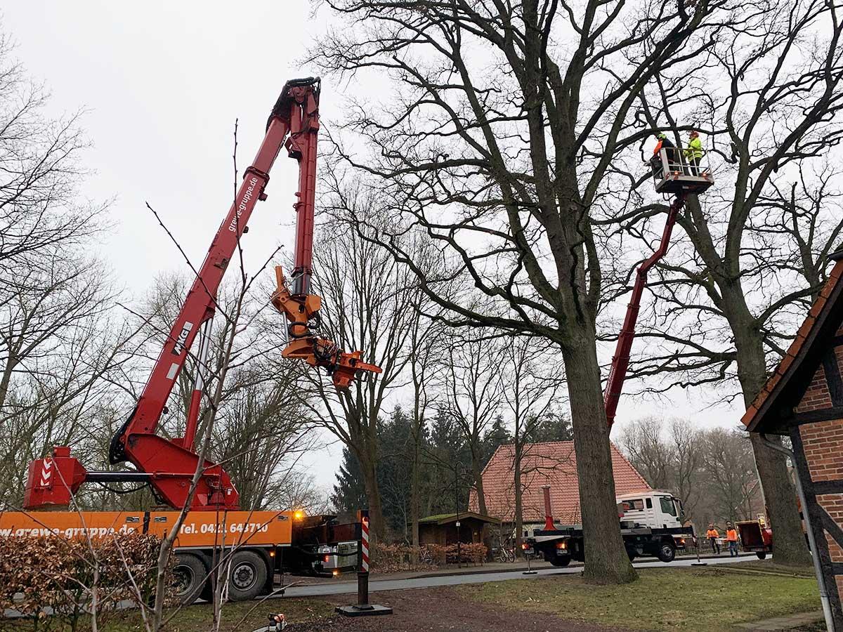 Grewe Baumpflege - Deutschlands größter Fällkran im EInsatz in Böhme